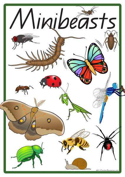 28 Minibeast Vocabulary Words